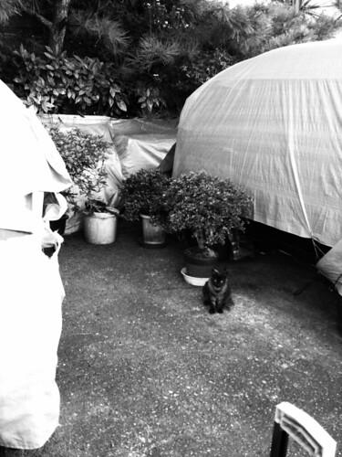 Today's Cat@20090824