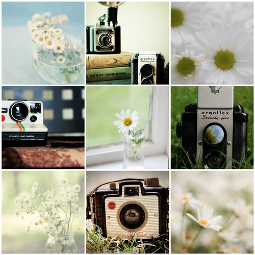 Things I Love Thursday:  Daisies & Vintage Cameras