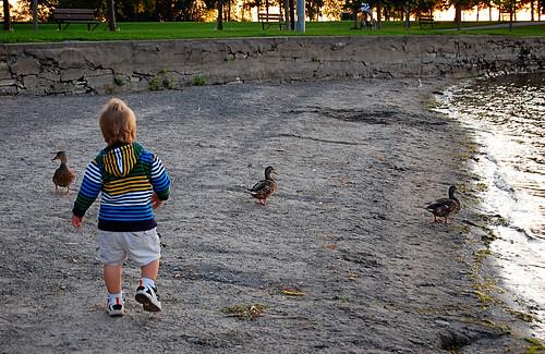 1追赶鸭子