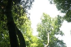_MG_6438.JPG (zimbablade) Tags: trees sleepyhollow dougmiller videopoem