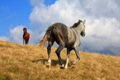 Al trotto (* Vly *) Tags: nuvole monte montagna cavalli cavallo alpe muggio valsassina prateria trotto alpegiumello montemuggio