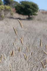 Grasses Photo