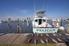 Oregon Inlet Fishing Center (The Outer Banks) Tags: oregon fishing bureau north pelican carolina inlet outer visitors tuna banks charter
