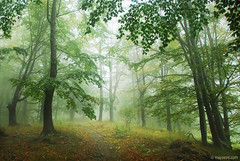 misty woods (.:: Maya ::.) Tags: park autumn eye nature misty landscape woods maya central bulgaria national haya balkan bulgarie bulgarien        mayaeyecom mayakarkalicheva  wwwmayaeyecom