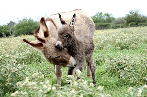 donkey_new1