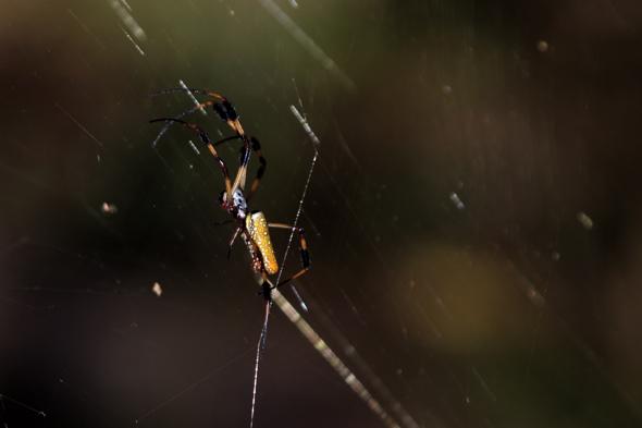 111109_spider01