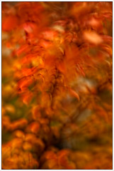 Sprinkled with Fall Colors (carlsonee) Tags: tree fall leaves blurred 5dm2