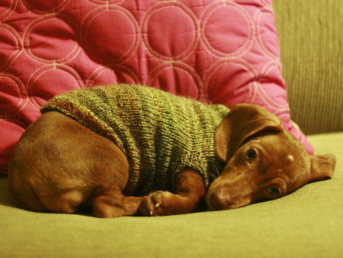 Sleepy puppy in handspun sweater