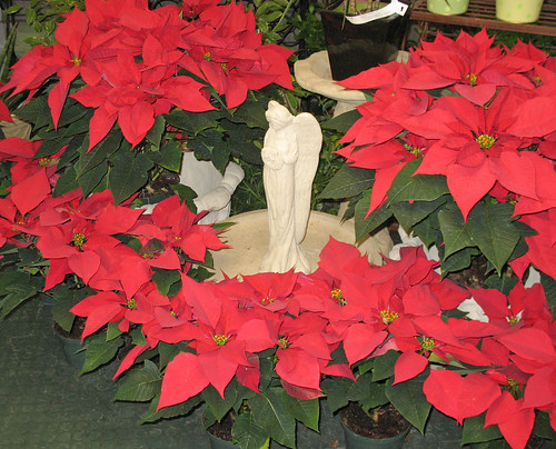 Poinsettias surround an indoor water feature.