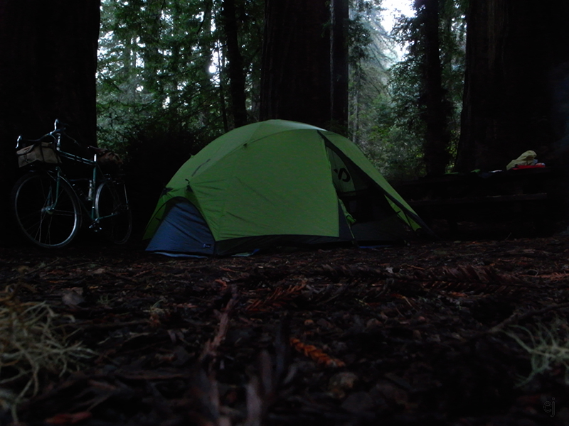 sam p campsite in redwood grove