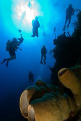 (gerb) Tags: ocean blue sea water topv111 1025fav 510fav wow cool nice topv555 topv333 underwater topv1111 topv999 bubbles scuba fv5 loveit pi topv777 diver cayman d200 sponge littlecayman shillouette aquatica 105mmf28gfisheye tvx