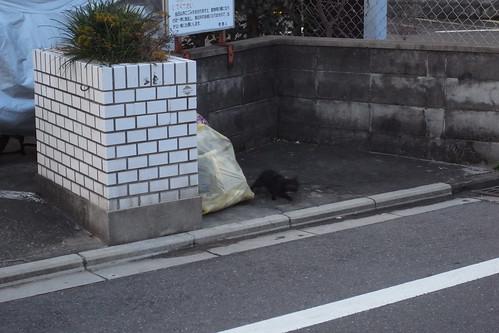 Today's Cat@20091214