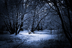 The Bench of Winter Wonderland (Gilderic Photography) Tags: wood blue winter snow cold tree forest bench europe belgium belgique belgie magic hiver chartreuse panasonic bleu neige liege foret arbre froid banc bois lightroom lumic peville superaplus aplusphoto tz4 oblats dmctz4 grivegnee bestcapturesaoi