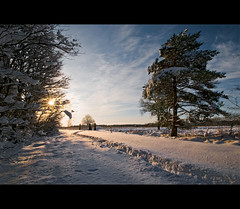 A very happy newyear to everyone! (Danil) Tags: winter light snow holland ice netherlands dutch landscape december daniel sneeuw nederland groningen 2009 friesland winterwonderland happynewyear landschap d300 bakkeveen gelukkignieuwjaar felizaonuevo waskemeer bonneanne buonanno eingutesneuesjahr gottnyttr felicxannovanjaron godtnytr bliadhnamhathur hauolimakahikihou selamattahunbaru yeniyilinizkutluolsun wijnjewoude  kiaharitetauhou  lokkichneijier sawatdiipima