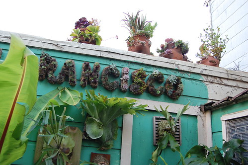 San Francisco in succulents.