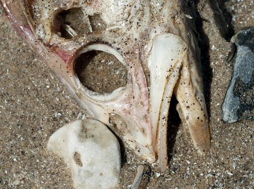 Dead Fish III