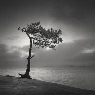 Veterans' Tree II