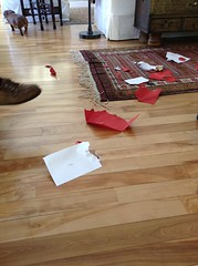 Someone had a Happy Valentine's Day! (smilla4) Tags: vaentinesday play dog canine dachshund inside interior maine