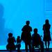 20090627 Aquarium 9