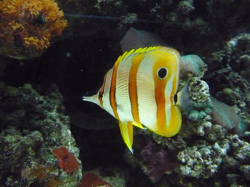 WMR Fish