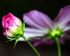 Simply Beautiful (~ Nanette ~) Tags: flower macro mauve simplythebest mywinners anawesomeshot anawsomeshot concordians picturefantastic phoddastica myloveforcindy youmywinner whatyouseeiswathyouare