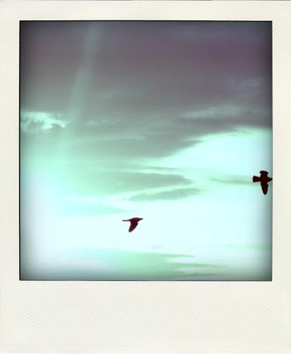 anniversary birds-pola