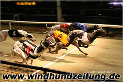 Greyhound Racing Wimbledon Stadium