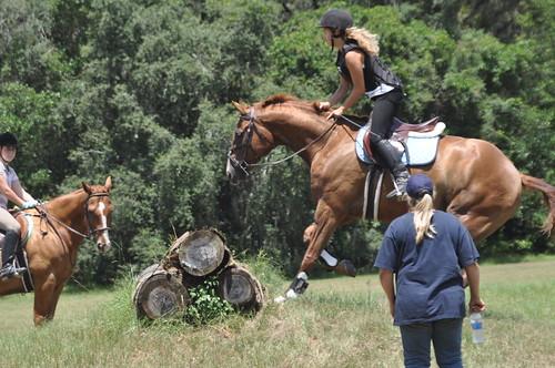 rocking horse 318