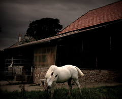 571 White Horse (Nebojsa Mladjenovic) Tags: light summer sky horse mist france color art nature animal digital rural dark french outdoors caballo cheval lumix frankreich europe burgundy panasonic ciel frankrijk animaux bourgogne francia priroda cavallo soe whitehorse morvan ete francais fz50 yonne svetlost chevalblanc konj abigfave platinumphoto animauxdecompagnie flickrdiamond artofimages mladjenovic bestcapturesaoi mygearandmepremium mygearandmebronze