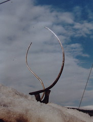 Klang Skulptur (mo_metalart) Tags: schmiedeskulptur kleinskulptur klanfskulptur schmiedeplastik geschmiedeteskulpturmetallkunstmetallskulpturenmetallskulpturmetallplastikgartenplastikmetallgestaltungkunstschmiedeschmiedeeisenbrunnenmetallmöbelkunstambaumetalldesigntischdesigngestaltunginnenraumundaussenraumfunktionsgegenständ