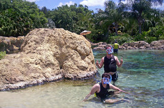 Discovery Cove weekend activity