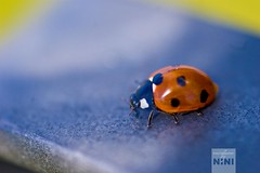 The absolutely first try of my new 105mm Macro ~ Day 25 ~ (explored) (bynini [slightly away]) Tags: new blue sea macro beach nature strand seaside natur sigma northsea ladybug dots makro strandkorb marienkfer 105mm beachchair smalldof