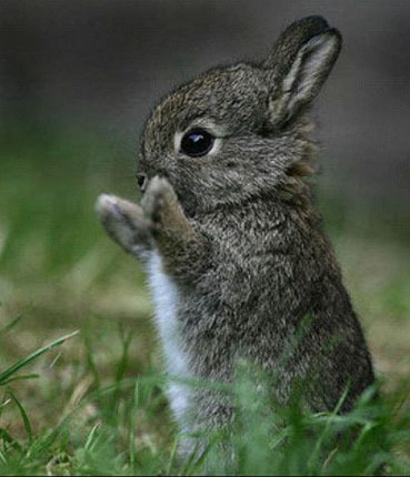 cute-little-bunny-rabbit1