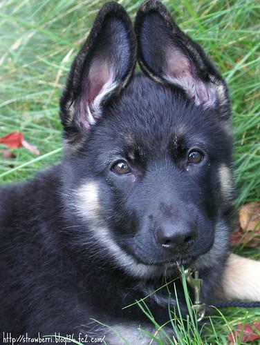 those ears!!