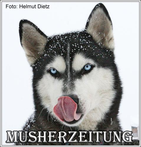 Husky-Gewinnspiel