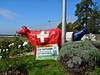 Swiss and French milk price protests (will_cyclist) Tags: cows cowsx