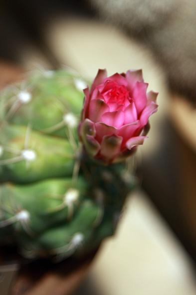100209_desertflowers01