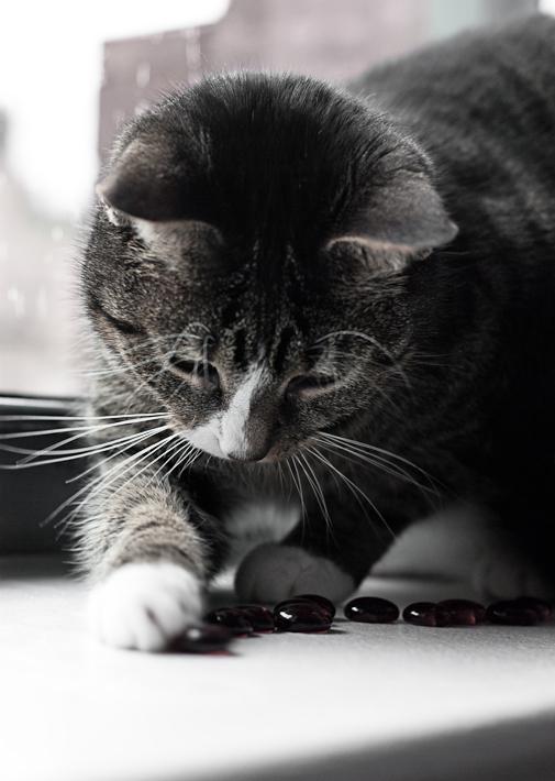 Bad Kitten!