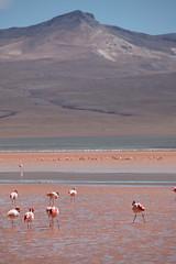 baudchon-baluchon-laguna-colorada-0519