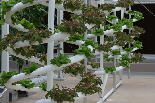 Homemade Hydroponics System Is Easy For Your Home Garden ...
