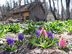 Hallam Lake Spring