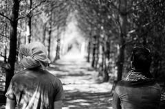 Pines (Bklynraised) Tags: trees people blackandwhite bw tree film nature pine analog 35mm canon vanishingpoint natural grove kodak ae1 bokeh pair trix naturallight tunnel towel 400tx hallway pines program canonae1 earlham passageway pinegrove earlhamcollege