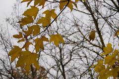 otoño - otoño