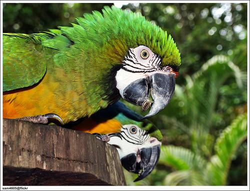 Lok Kawi Wildlife Park - parrot
