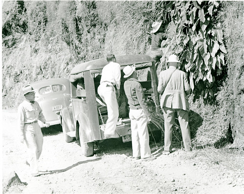 David Fairchild collecting an aroid along the road to Vigan
