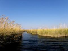 lagoon in Okavango Delta (yuyu418) Tags: africa morning camping sunset wild elephant tree bird animal wonderful river landscape dawn amazing buffalo desert dusk wildlife lion lagoon safari exotic crocodile wildanimal hippo botswana wilderness impala baobab lepard 267 morningsunrise