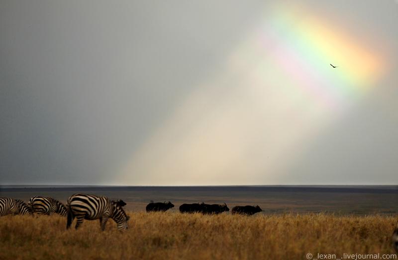 rainbow in Serengeti