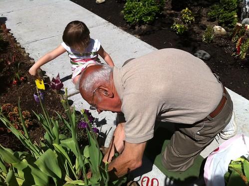 Kate Gardening with Papa
