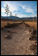 Camino Parque Natural Cabo de Gata-Níjar (scarabaeus sacer) Tags: verano 2009 almería cabodegata cabodegatanijar a3b nikond300 jatm64