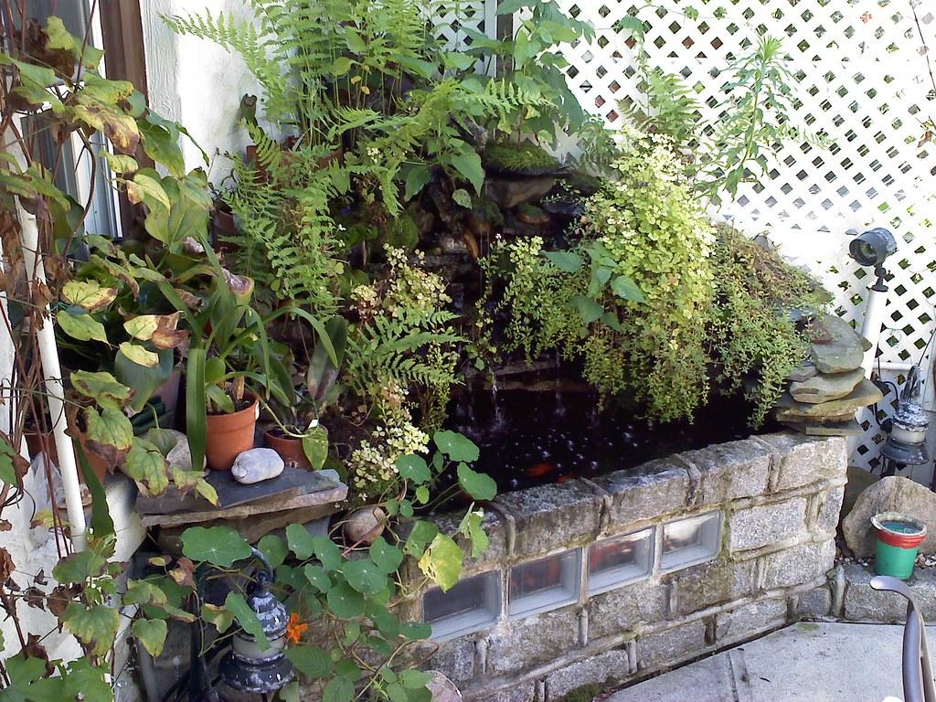 backyard aquaponics u2022 view topic mike u0027s first aquaponics